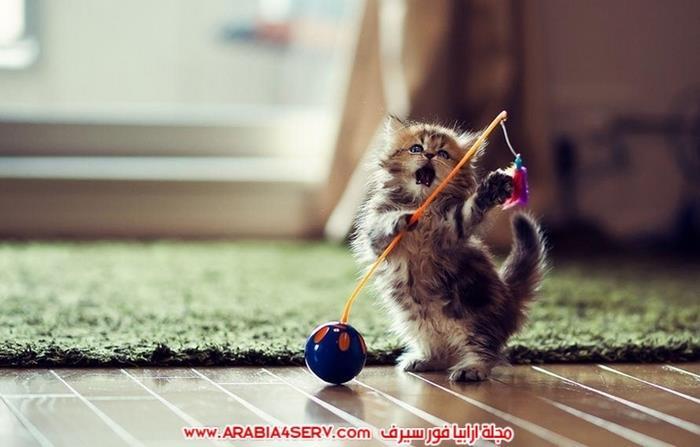 صور-قطط-طريفة-جميلة-كيوت-اوي-روعة-6