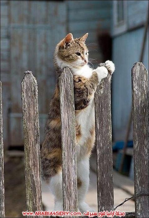 صور-قطط-طريفة-جميلة-كيوت-اوي-روعة-8