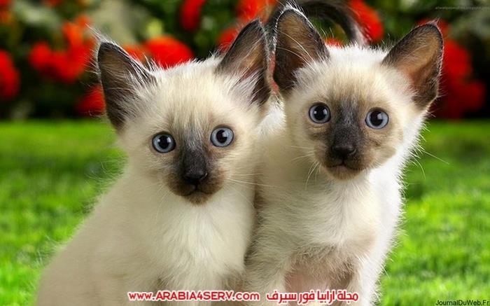 صور-قطط-كبلز-جميلة-روعة-رومانسية-كيوت-2