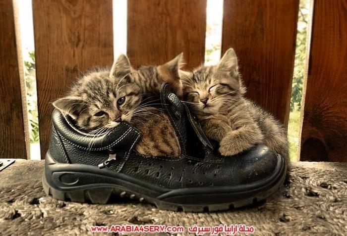 صور-قطط-كبلز-جميلة-روعة-رومانسية-كيوت-4