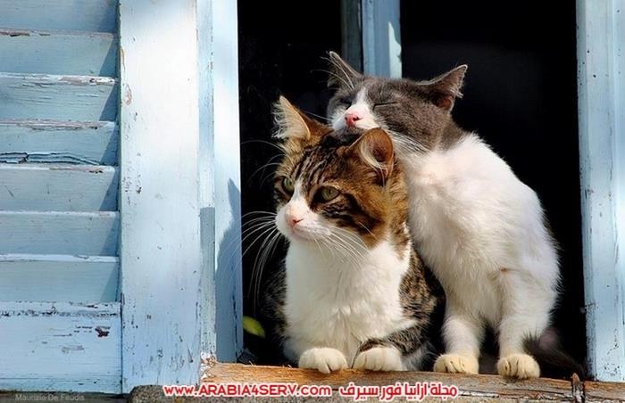 صور-قطط-كبلز-جميلة-روعة-رومانسية-كيوت-5