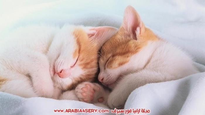صور-قطط-كبلز-جميلة-روعة-رومانسية-كيوت-6