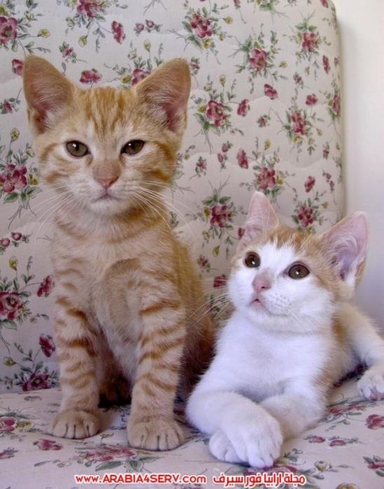 صور-قطط-كبلز-جميلة-روعة-رومانسية-كيوت-7