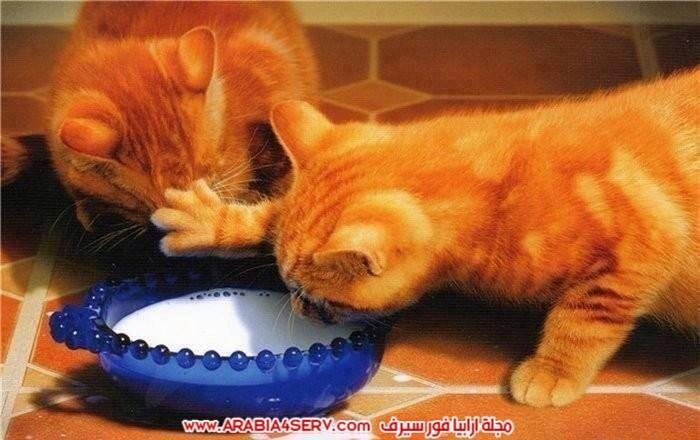 صور-قطط-كبلز-جميلة-روعة-رومانسية-كيوت-9
