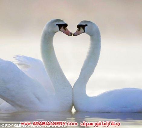 صور-قلوب-طبيعية-8