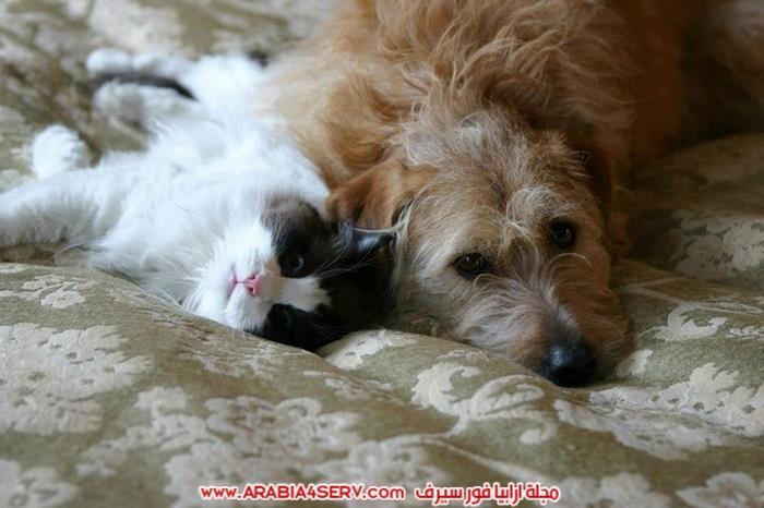 صور-كلاب-مع-قطط-جميلة-كيوت-2