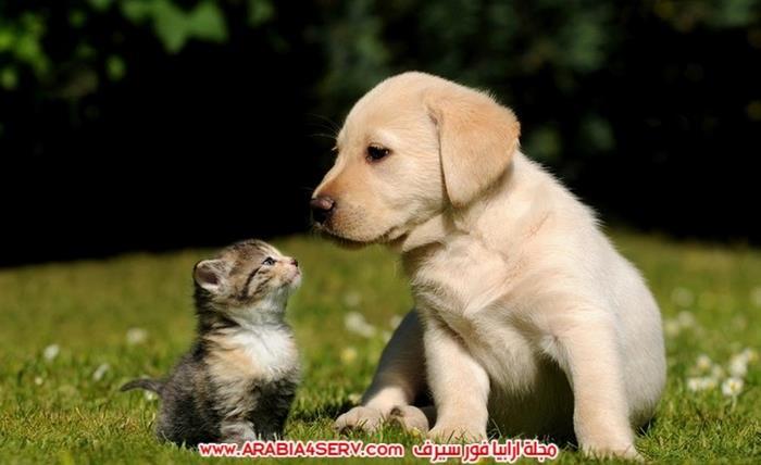 صور-كلاب-مع-قطط-جميلة-كيوت-3