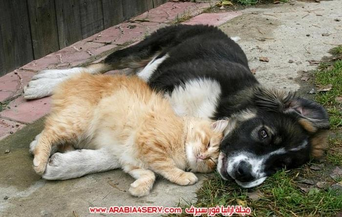 صور-كلاب-مع-قطط-جميلة-كيوت-5