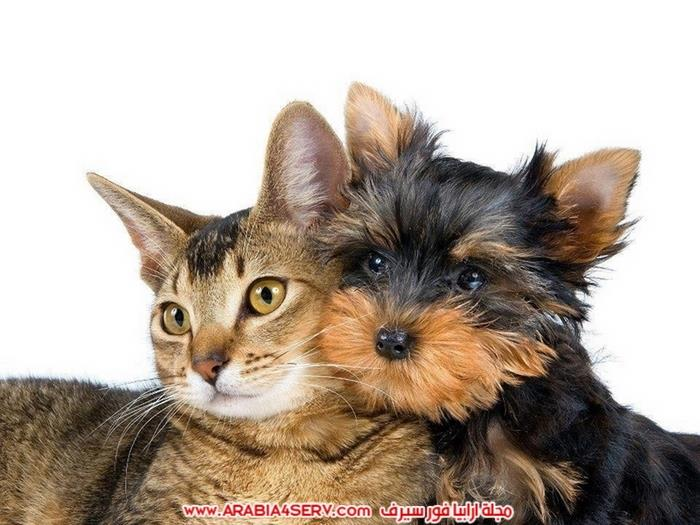 صور-كلاب-مع-قطط-جميلة-كيوت-8