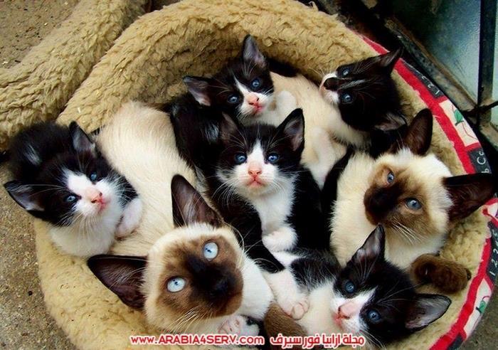 صور-مجموعات-من-القطط-جميلة-جدا-1