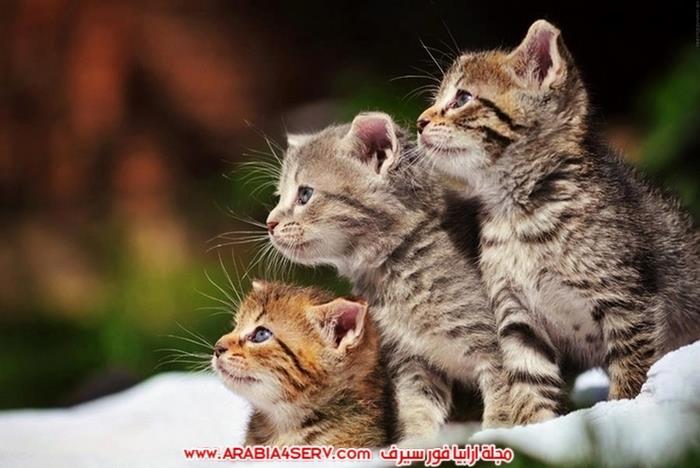 صور-مجموعات-من-القطط-جميلة-جدا-2