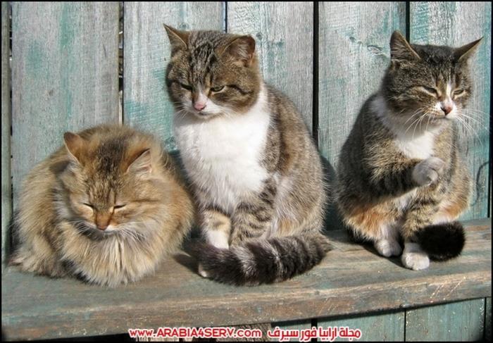 صور-مجموعات-من-القطط-جميلة-جدا-3