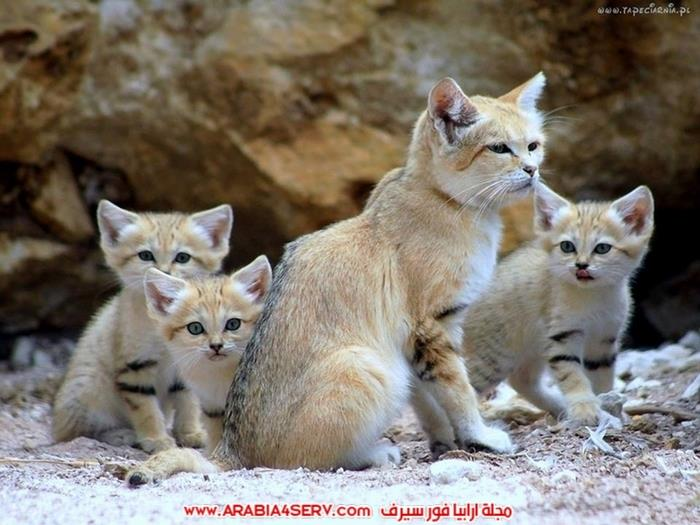 صور-مجموعات-من-القطط-جميلة-جدا-5