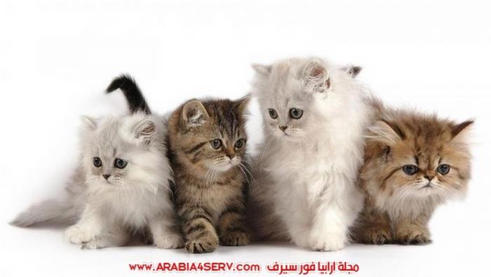 صور-مجموعات-من-القطط-جميلة-جدا-6