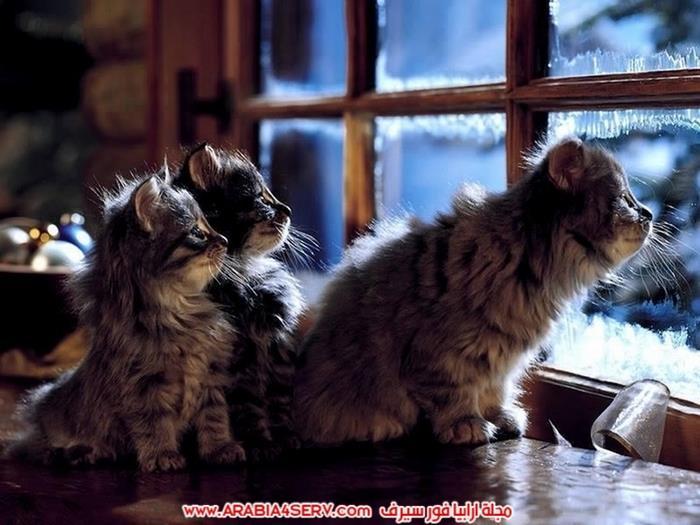 صور-مجموعات-من-القطط-جميلة-جدا-7