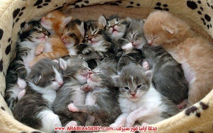 صور مجموعات من القطط جميلة جدا