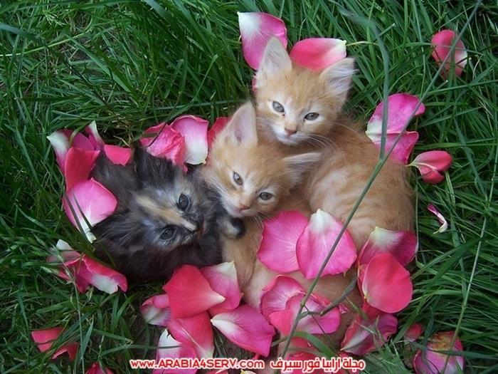صور-مجموعات-من-القطط-جميلة-جدا-9