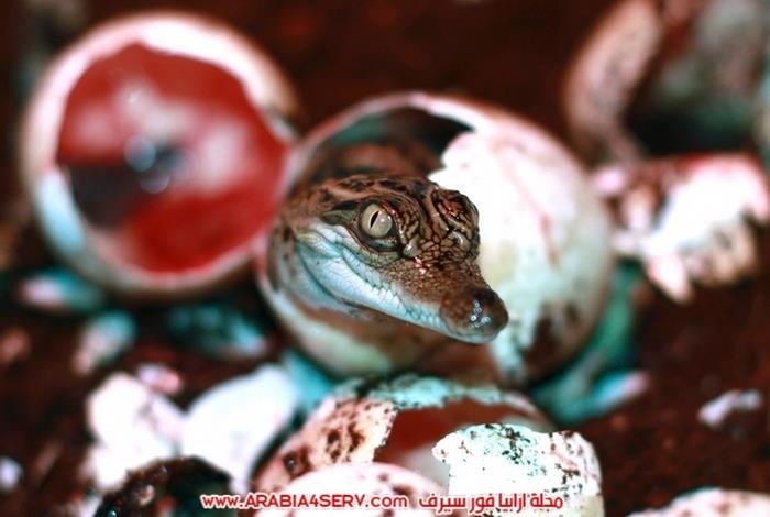 صور-مخلوقات-متنوعة---تصوير-احترافي-3