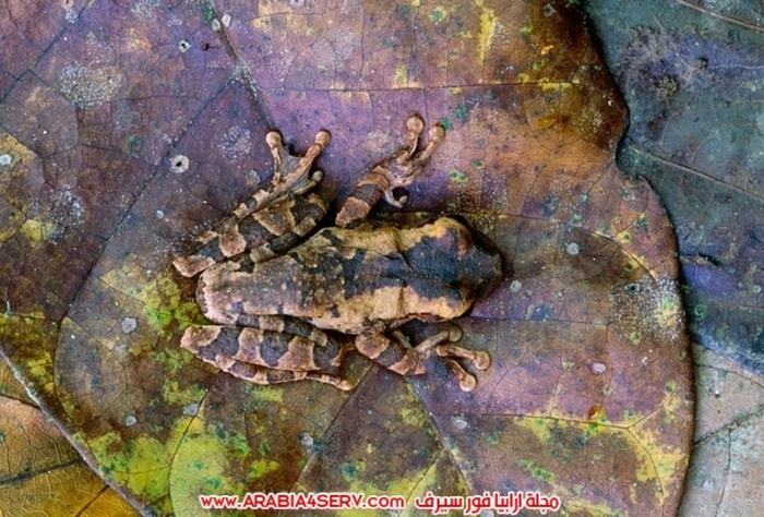 صور-مموهة-للحيوانات---حيوانات-تتلون-حسب-الطبيعة-3